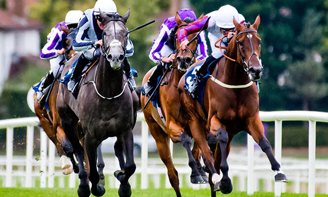 horse racing at Leopardstown Racecourse