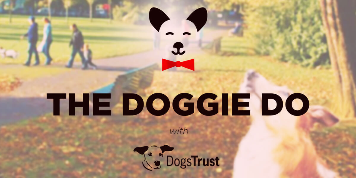 The Doggie Do